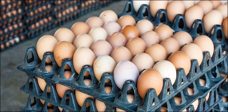 Sindh Food Authority conducts raid at shop selling 'plastic eggs'