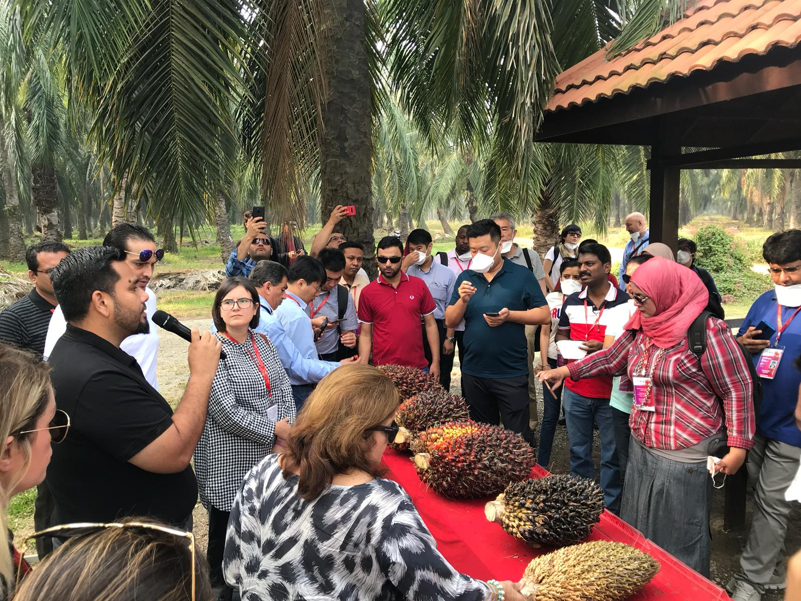 Director Aisha Junejo information about Palm Oil Seed in Malaysia